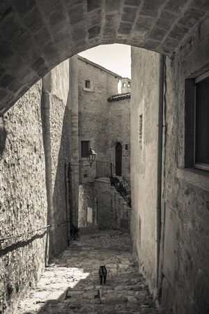 Cat walking on old alley of Postignano in Umbria