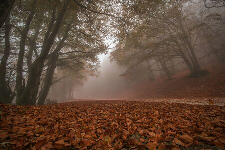 Scenery of autumn nature with vivid foliage and fog in the Park of Monte Cucco, Umbria