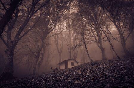 Vista di una piccola casa stregata abbandonata nel bosco incantato con nebbia