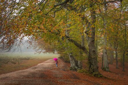 Rainy day in the autumn park of Canfaito in the Marche region