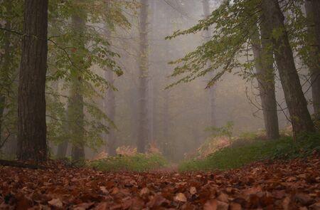 Path through a dark forest at night with fog