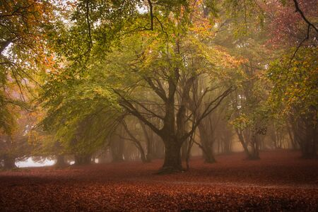 Enchanted forest of Canfaito with fog in the autumn season