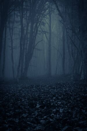 View of dark forest with fog, photo taken in Transylvania, Romania