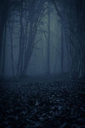 Vista del bosque oscuro con niebla, foto tomada en Transilvania, Rumania