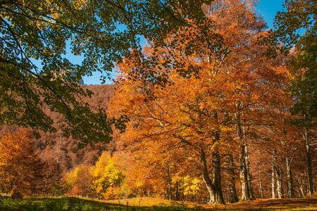Wild forest of mount Terminillo in the autumn season, Lazio, Italy
