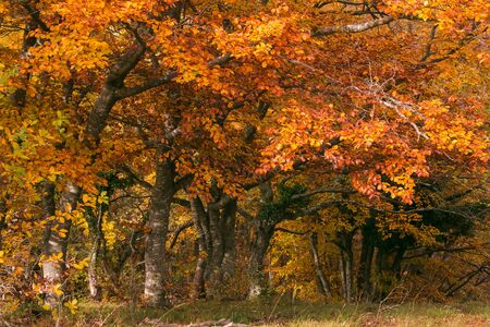 Schöne herbstliche Farben im Naturschutzgebiet Canfaito, Marken, Italien