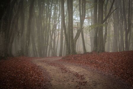 Road trees in autumn forest sunrise Nature background Nature landscap