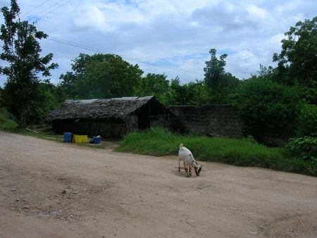 African Scene - Goat outside Kibanda Stock Photo - 2384748
