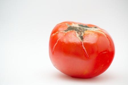 Moldy tomato es  Stock Photo