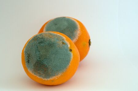 unhealthful: Two moldy oranges