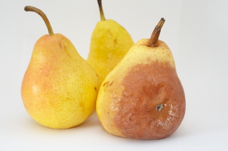 unhealthful: Moldy pear