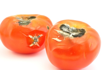 mustiness: Moldy tomato es  Stock Photo