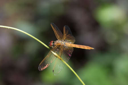 Dragonfly on the branch. Stock Photo