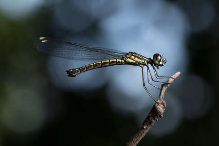 Damselfly on the branch.