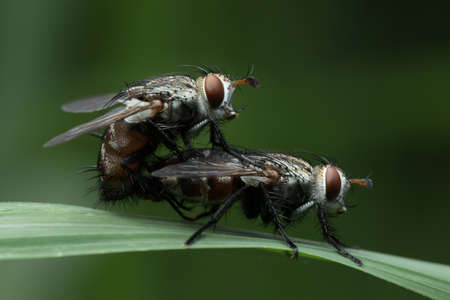 House fly in Thailand. Stock Photo
