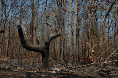 After wildfire in the forest. Stock Photo