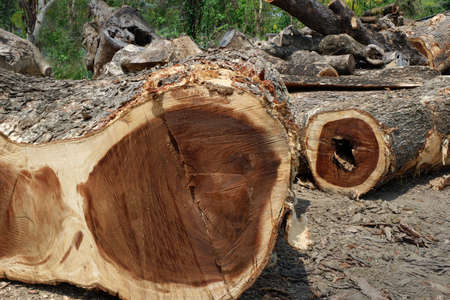 Deforestation, Cutted trees from the forest in Thailand and Southeast Asia. Stock Photo