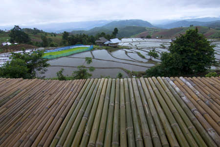 Rice field terrace on the morning in Chiang mai, Thailand. 版權商用圖片