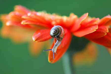 Snail and flower with droplets in nature background.