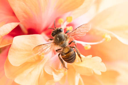 Honey Bee and flower in Nature Background.
