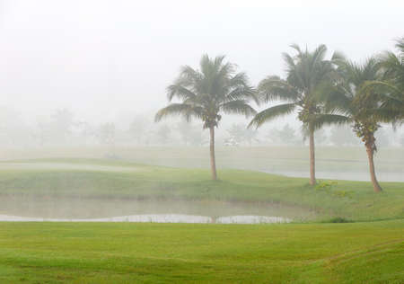 Green Golf course and fog in the morning.