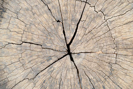 Old Wood texture for Background.