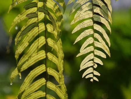 Fern Leaves plant pattern for background. Archivio Fotografico