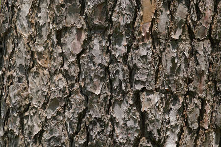 Old Wood Texture for nature Background.
