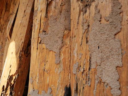 Termites mound on the wood.