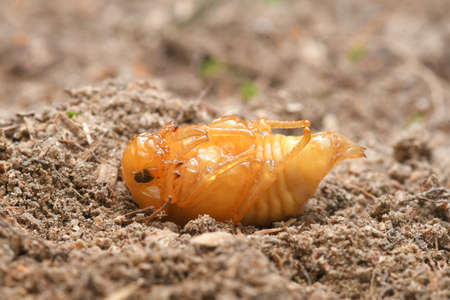 Pupa or Worm on nature Background.
