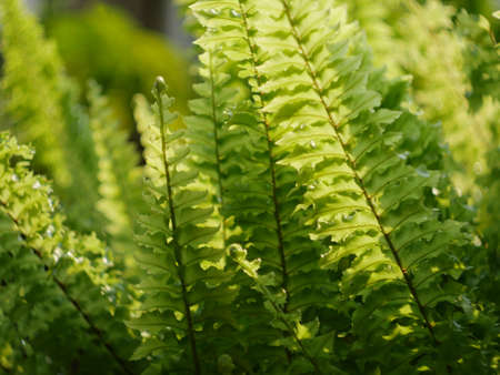 Fern Leaves plant pattern for nature background.