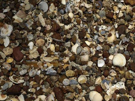Shell texture photo