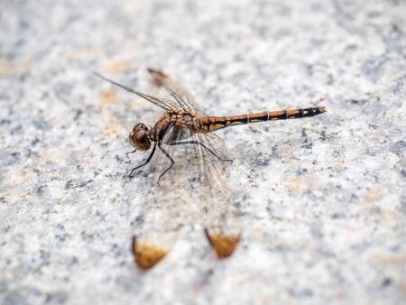 darning needle: dragonfly