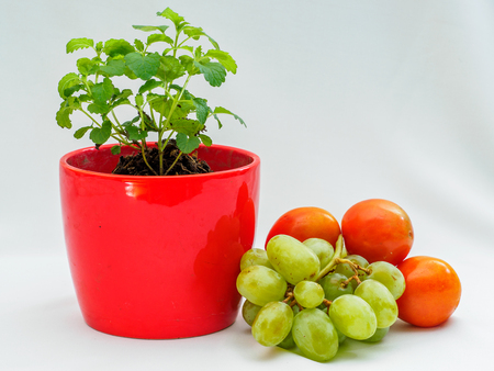 pepper mint: Pepper Mint, Grape and Tomato Stock Photo
