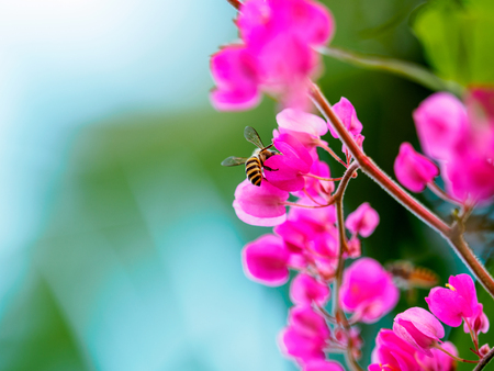 bee on flower: Flower with Honey Bee Stock Photo