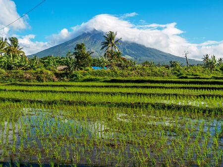 mayon: Mayon volcano