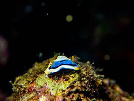 nudibranch: nudibranch Stock Photo
