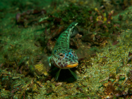 goby: fish