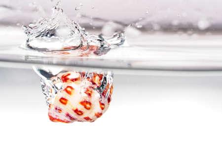 drop water: seashell water drop Stock Photo