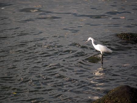 gray herons: heron on the sea