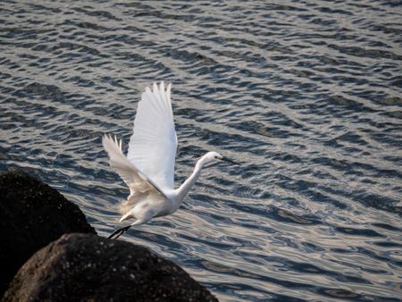 wingspan: heron on the sea