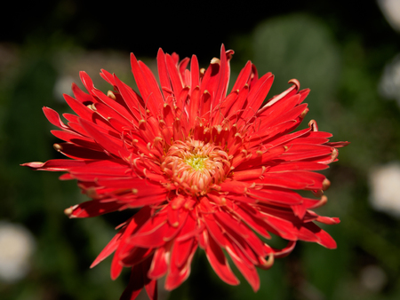 hayfever: red Wildflowers