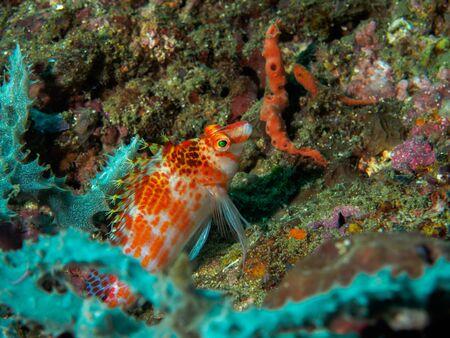 dangerous reef: fish at underwater, Philippines Stock Photo