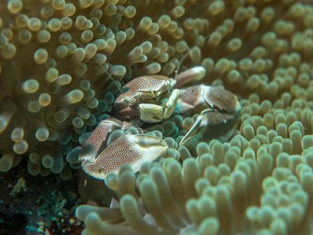 crab under the sea