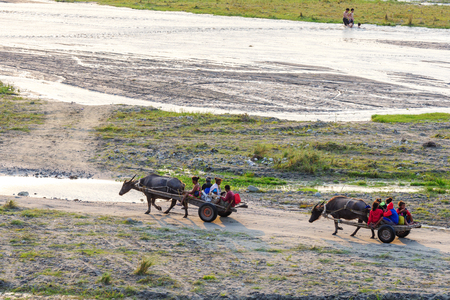Feb 17,2018 Aboriginal people returning home in a Carabao carriage, Capas, Philipppines