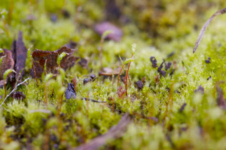 The ant macro in the moss after the rain