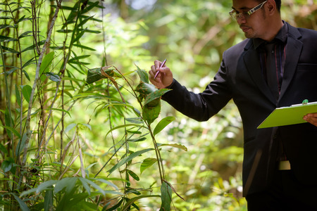 Animal researchers are checking ants in the woods. Stock fotó