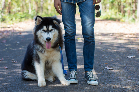 Siberian dog in the road woods with a young man.
