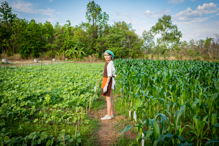 Plant researcher stands on a cornfield.