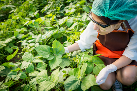 Plant researchers are examining the quality of plants. Stock Photo